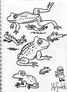 sketchbook-frogs